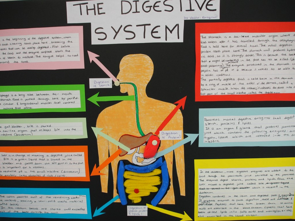 Lesson Idea: Digestive System - YouTube